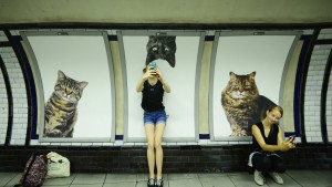 Gatos en el metro de Londres
